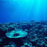 Salvando Arrecifes De Coral