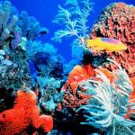 ¿Como Proteger los Arrecifes de Coral? @MildredReal @ColumnaEstilos