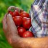 ¿Aburridos Del Tomate? Preparen Esta Receta